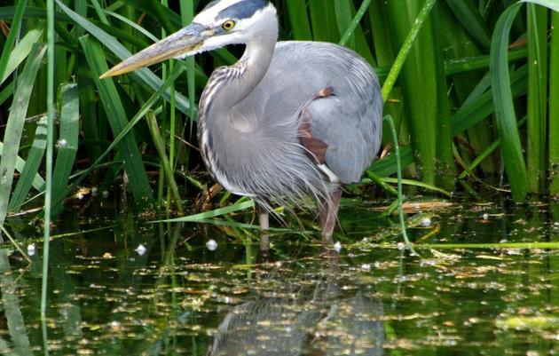 Bird Species at Patterson Park