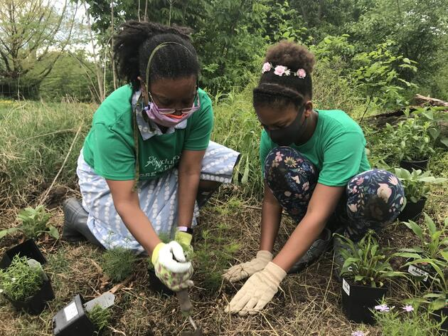 Baltimore Celebrates Bird-Friendly Native Plants