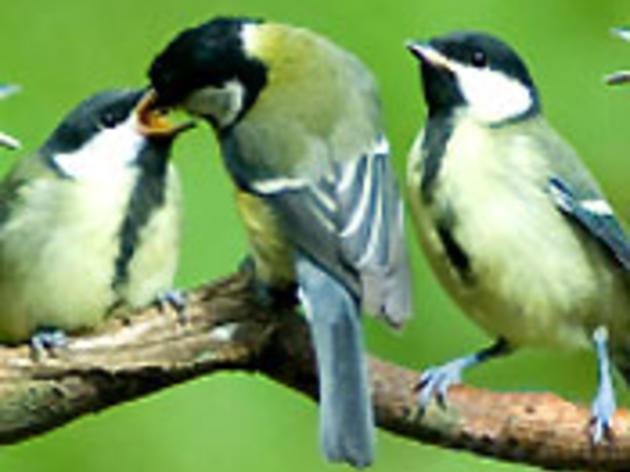 Bird Blitz 2011