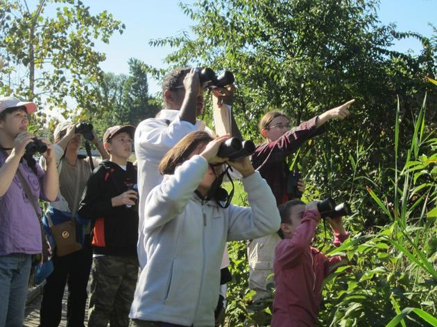 Young Bird Explorers